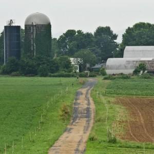 Nicks Farm